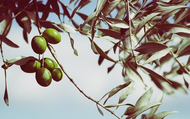 olives-945749_640